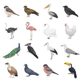 Insieme di uccelli realistici