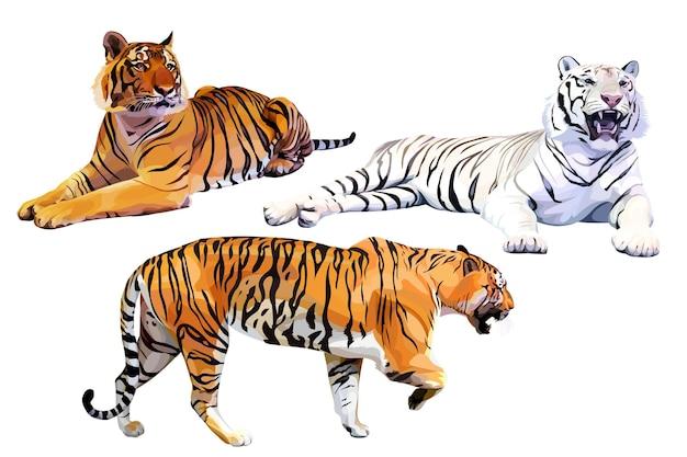 Set di tigri del bengala bianche e arancioni realistiche