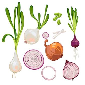 Set di cipolle mature dell'azienda agricola, cipolle germogliate, cipolle verdi, fette, anelli. isolato su bianco