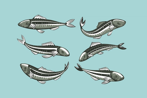 Set di sardine. illustrazione di pesce