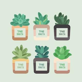 Set di sei cornici kawaii cute succulent photo