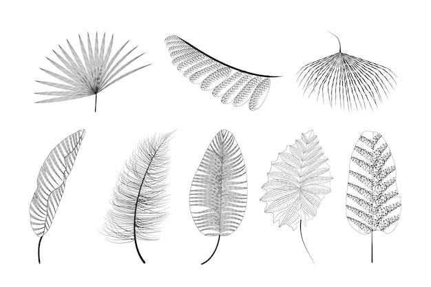 Set di foglie tropicali di vettore di schizzo