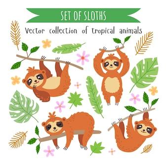 Set di bradipi isolati su bianco