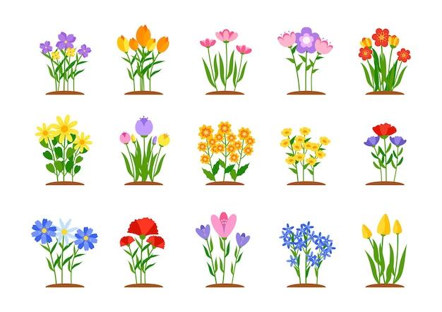 Set di fiori da giardino primaverili in aiuole fiorite da giardino in stile piatto con narcisi o margherite di tulipani colorati in crescita