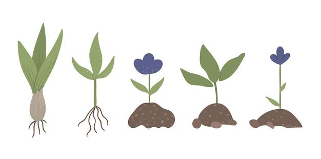 Insieme di piante germogliate con radici isolate su bianco