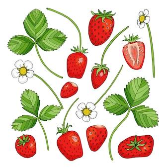 Set di fragole con foglie e fiori, cartoni animati