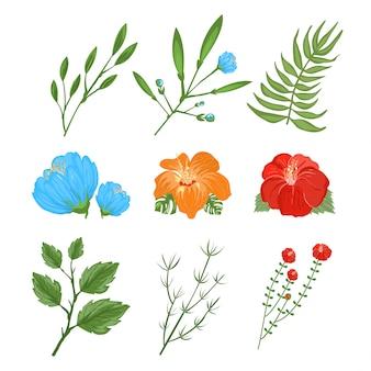 Set di fiori tradizionali e tropicali