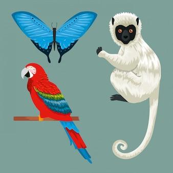 Set farfalla tropicale con pappagallo e lemure