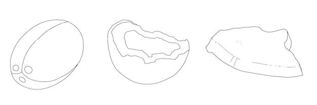 Insieme di doodle di schizzo lineare di noci di cocco tropicali