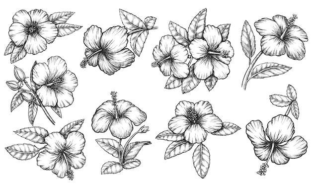 Set di foglie e petali di fiori di ibisco hawaiano tropicale