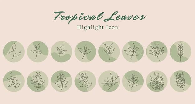 Set di icone botaniche di foglie tropicali sui social media evidenziano il modello di storia in sfondo verde