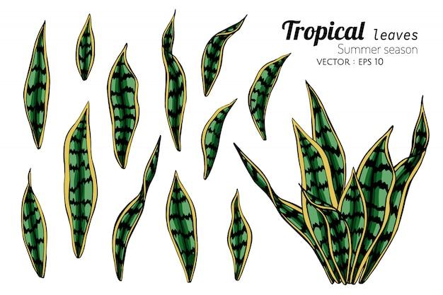 Insieme dell'illustrazione tropicale del disegno della foglia con la linea arte su bianco