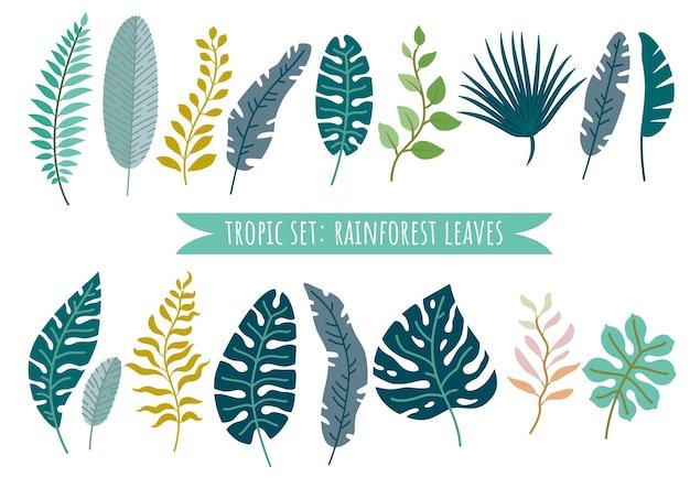 Set di foglie tropicali vettore foglie di foresta pluviale