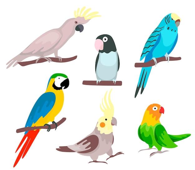 Set di pappagalli tropicali. illustrazione in stile cartone animato