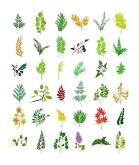 Set di ramoscelli con fiori foglie bacche