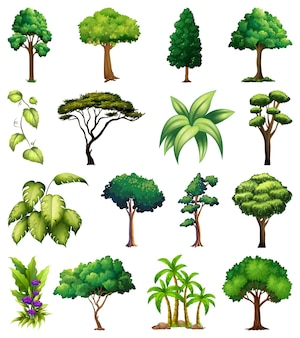Set di piante e alberi di varietà