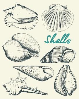Insieme di varie belle conchiglie di molluschi