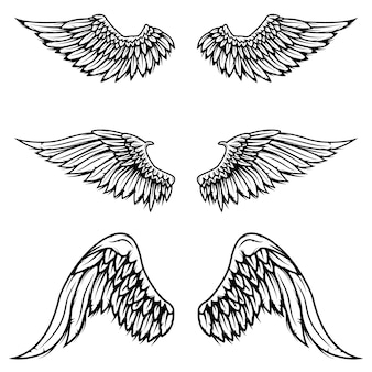 Insieme delle ali d'annata su fondo bianco.