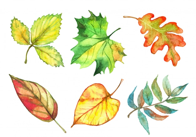 Insieme delle foglie di autunno dell'acquerello. vettore
