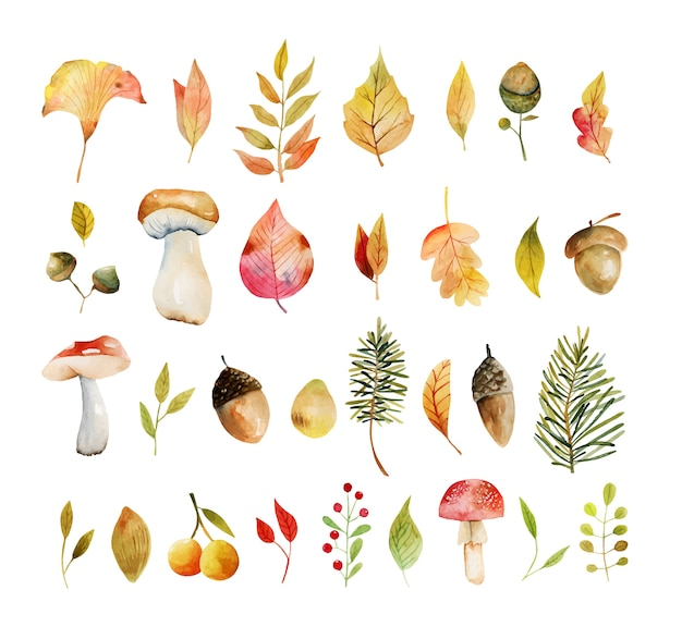 Insieme delle foglie di albero gialle delle piante di autunno dell'acquerello, foglie di quercia, ghiande e funghi illustrazioni isolate dipinte a mano su un fondo bianco