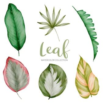 Insieme dei rami verdi dell'acquerello con belle foglie di colore su bianco