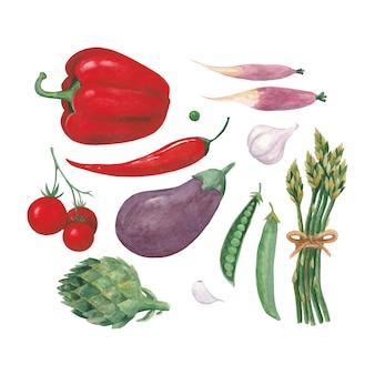 Serie di illustrazioni ad acquerello con diverse verdure