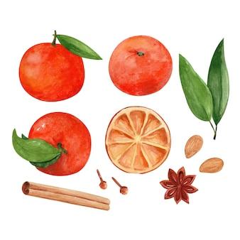 Set di illustrazioni ad acquerello con mandarini e spezie di capodanno