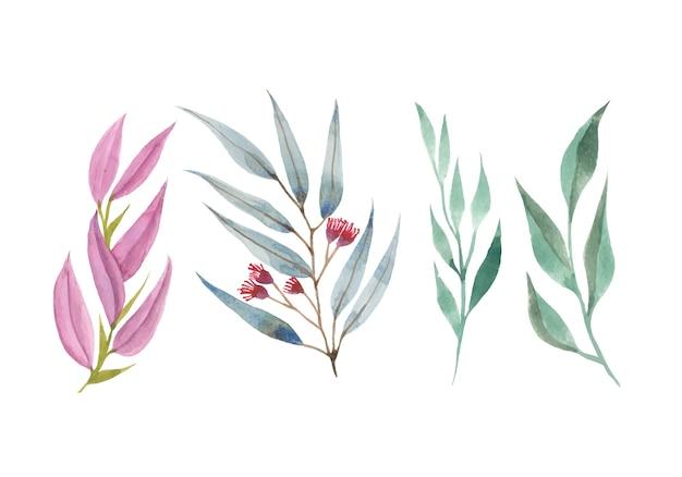 Set di acquerelli di foglie e fiori isolati su bianco