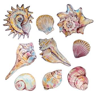 Set di conchiglie multicolori dell'acquerello di diverse forme