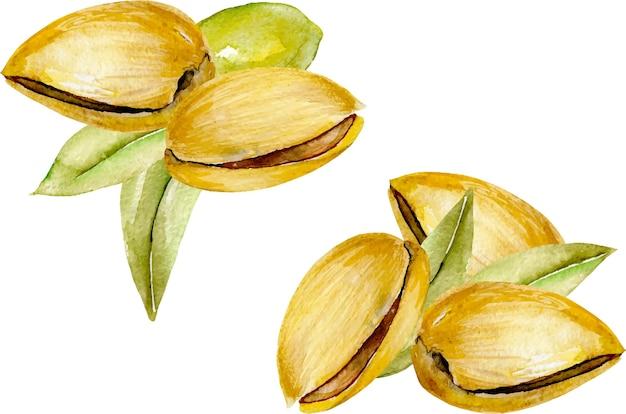 Serie di illustrazioni di pistacchi dell'acquerello