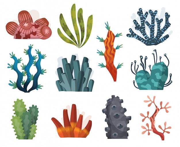 Set di alghe acquerello e coralli isolato su sfondo bianco. alghe subacquee collezione di piante d'acquario. vita marina. coralli e alghe isolati. flora subacquea