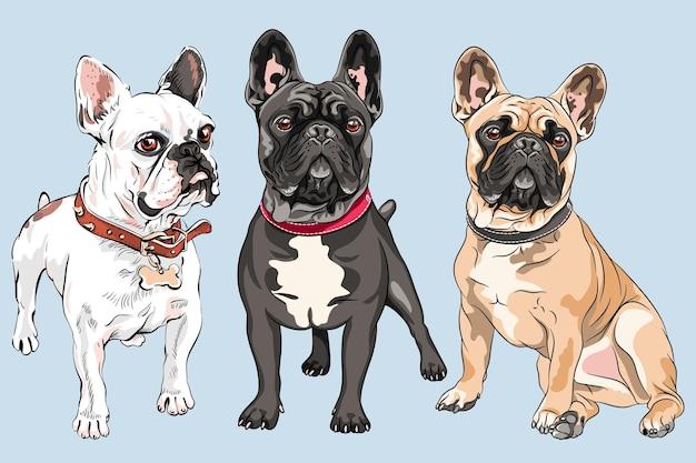 Set di bulldog francesi bianchi, fulvi e neri