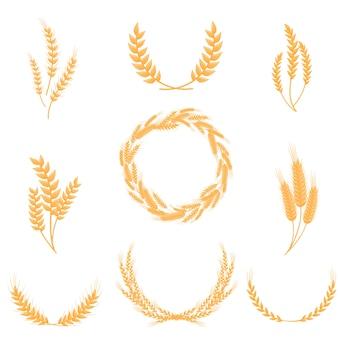Set di spighe di grano intero. per la produzione di farina e pane. illustrazione su sfondo bianco.