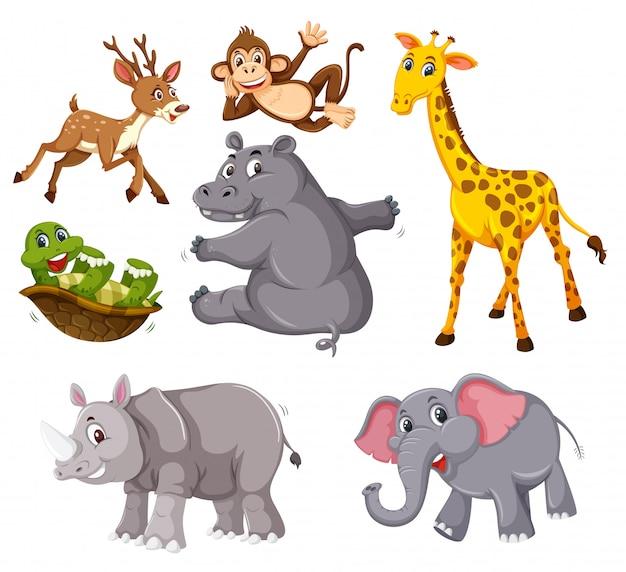 Una serie di animali selvatici su sfondo bianco