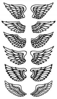 Insieme delle ali isolate su bianco