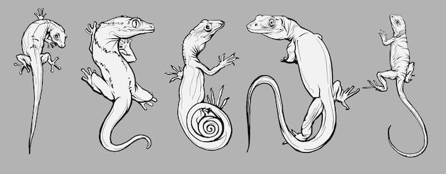 Set con bellissimi rettili e lucertole diversi. rettili da colorare pagina, illustrazione disegnata a mano.