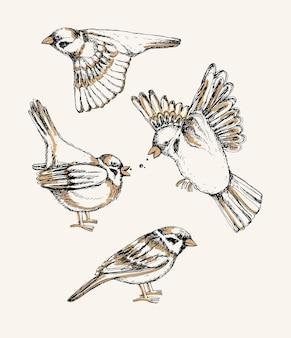 Set con diversi passeri volanti e seduti