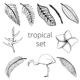 Set con foglie tropicali e fenicotteri. illustrazione di doodle di vettore in bianco e nero