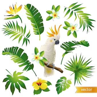 Set con foglie tropicali, fiori e uccelli