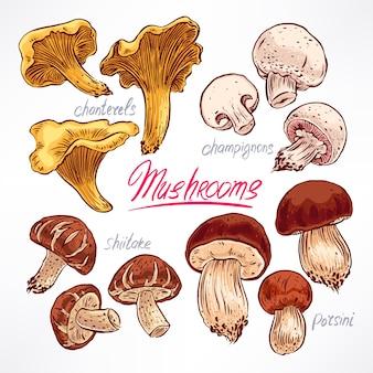 Set con una varietà di funghi