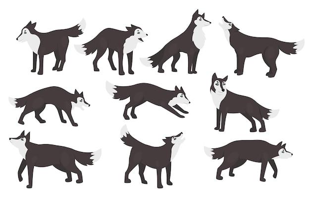 Set di pose di lupo isolato su bianco