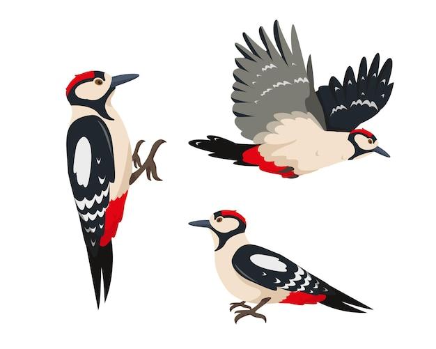 Set di uccelli picchio picchi luminosi in diverse pose isolate su bianco