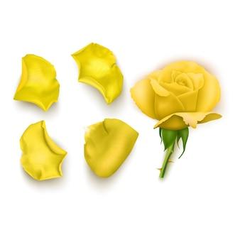 Set di petali di rosa gialla