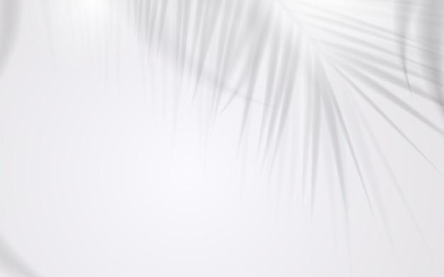 Ombra di foglia di cocco su sfondo bianco. illustrazione vettoriale