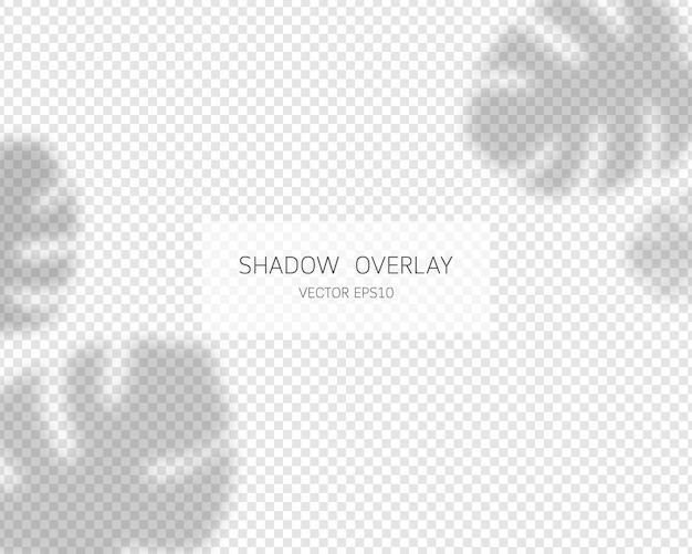 Effetto di sovrapposizione dell'ombra. ombre di foglie tropicali. ombreggiatura sfumata e effetto di sovrapposizione di luce.
