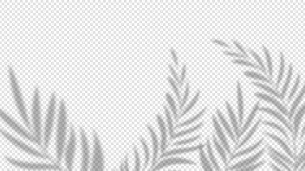 Foglie di palma ombra. effetto pianta sovrapposta su sfondo trasparente. bandiera di vettore di natura offuscata minimalista estate. l'ombra della palma si sovrappone, copre l'illustrazione della foglia del ramo