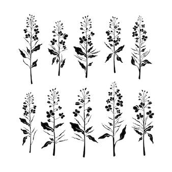 Forma di pianta con fiore di semi di gemma foglia senape di olio di colza