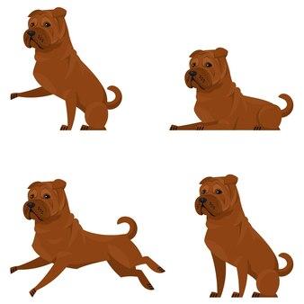 Shar pei in diverse pose. bellissimo animale domestico in stile cartone animato.