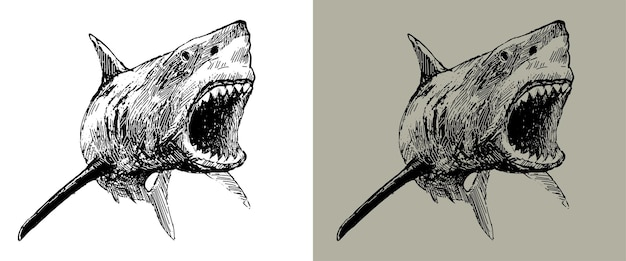 Squalo con immagine vettoriale bocca aperta attaccando il grande squalo bianco con la bocca ringhiante