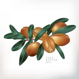 Noci di burro di karitè con l'illustrazione delle foglie